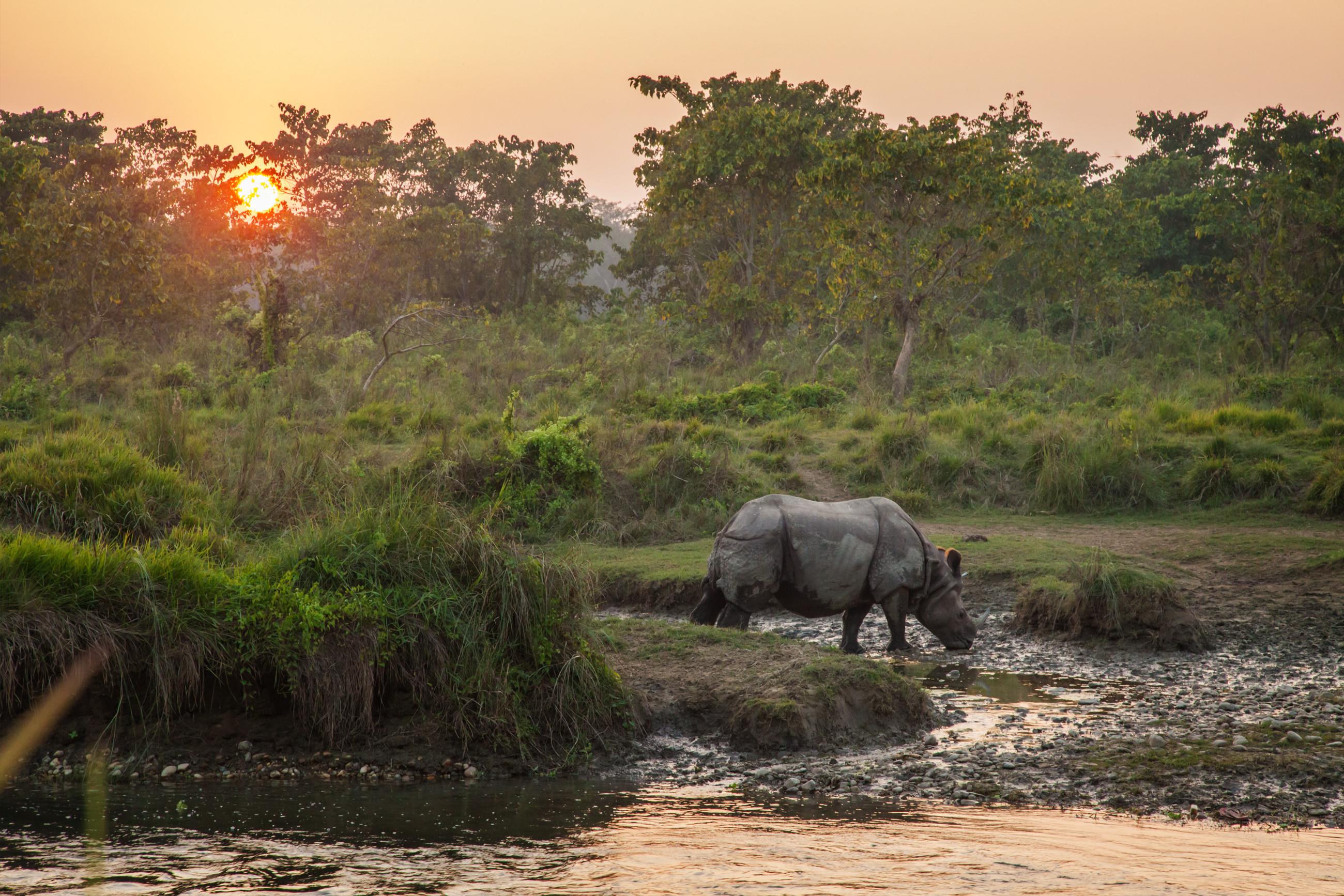 https://bubo.sk/uploads/covery_2019/chitwan_cover.jpg