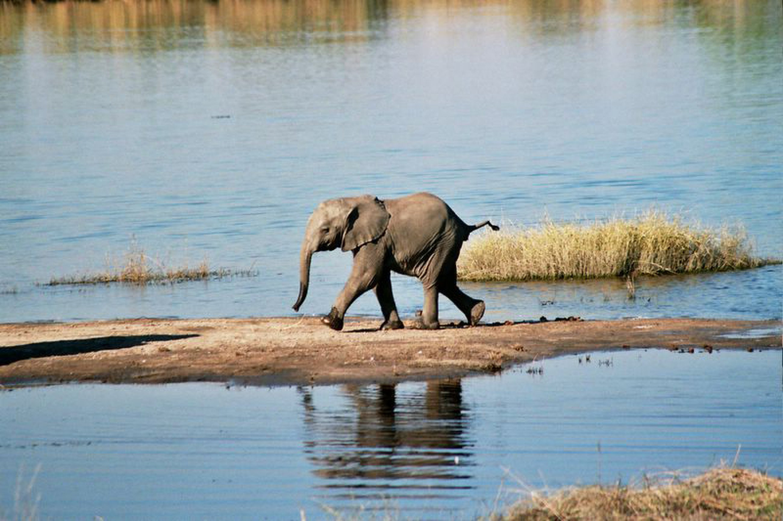 https://bubo.sk/uploads/galleries/16033/ian-708-03-baby-elephant-chobe-river-botswana.jpg