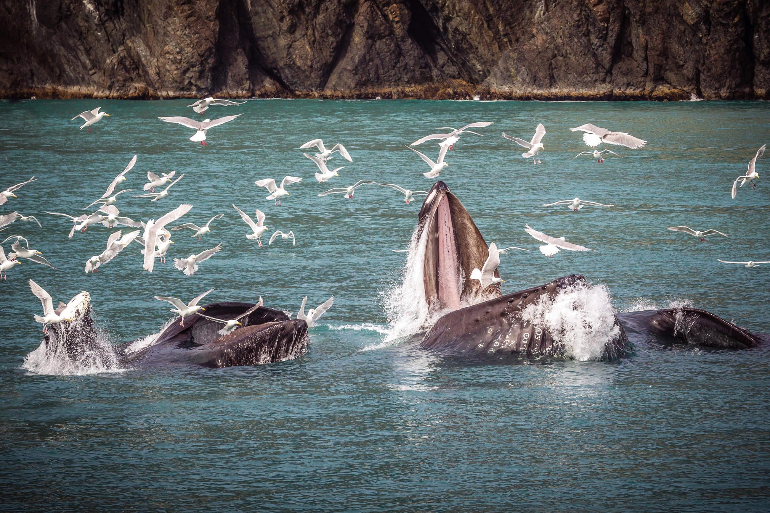 https://bubo.sk/uploads/galleries/16051/pxb_aljaska_humpback-whale-3928551.jpg
