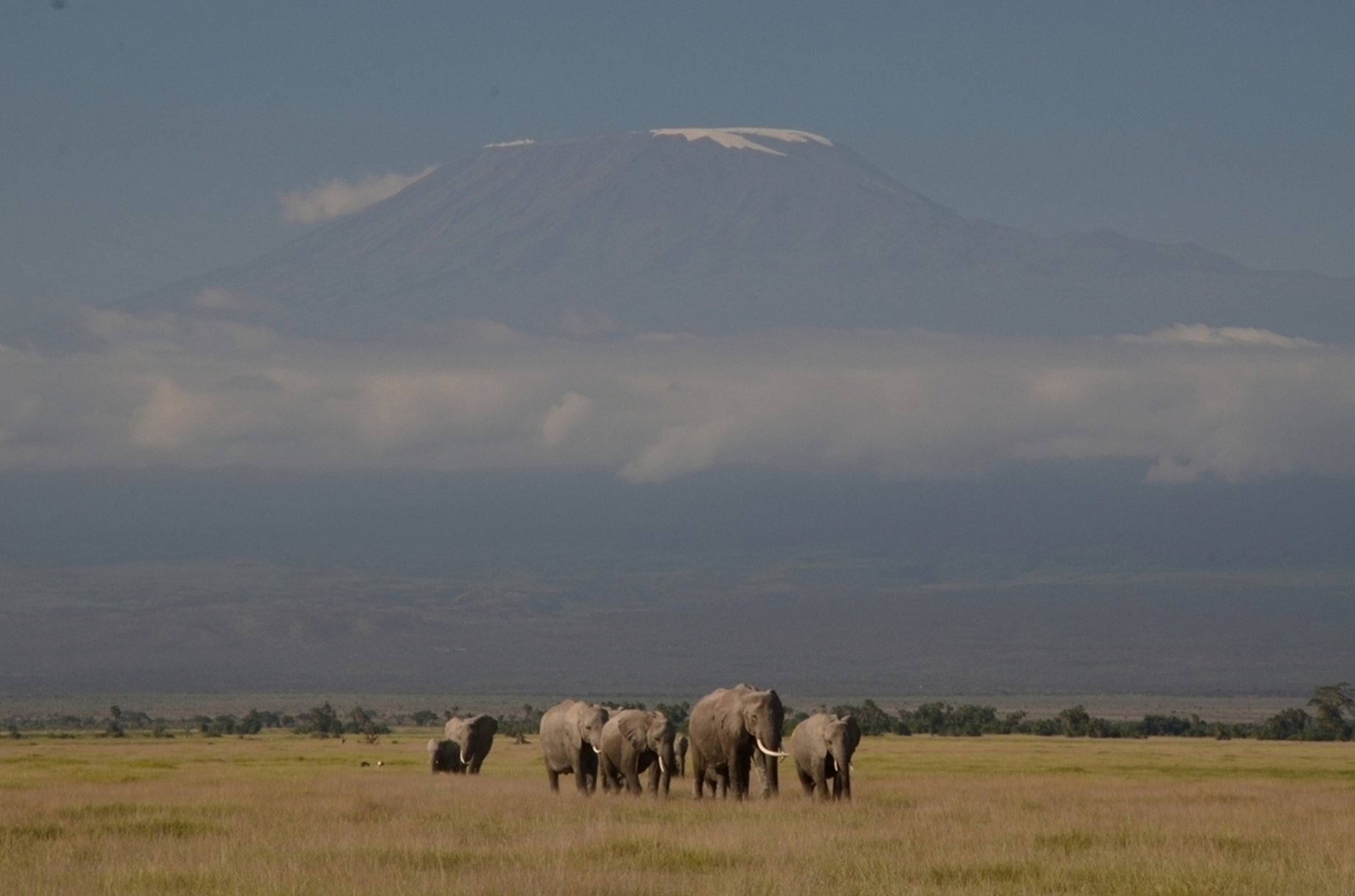 https://bubo.sk/uploads/galleries/16285/amboseli-mak_0539.jpg