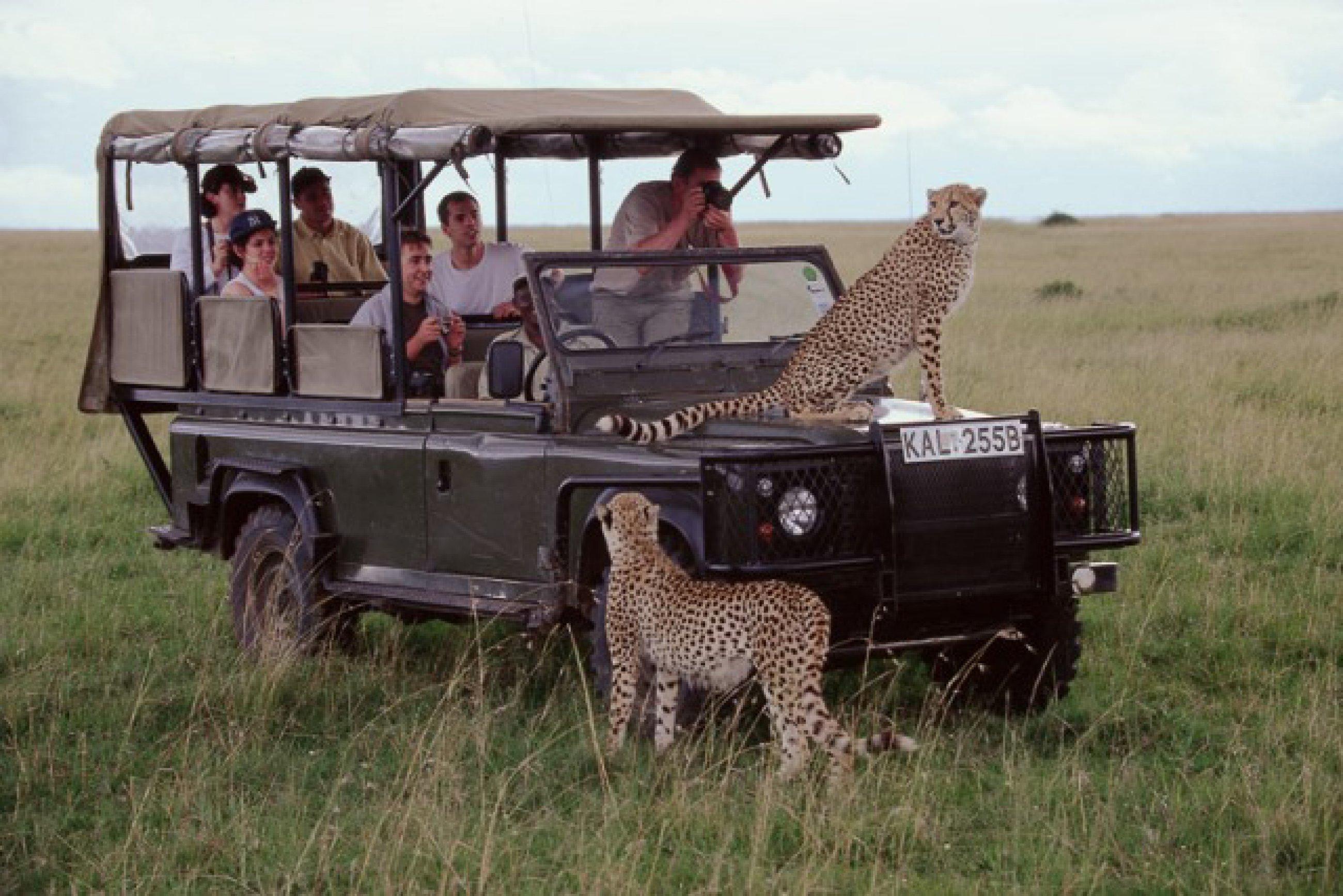https://bubo.sk/uploads/galleries/16287/safari-masaimara.jpg