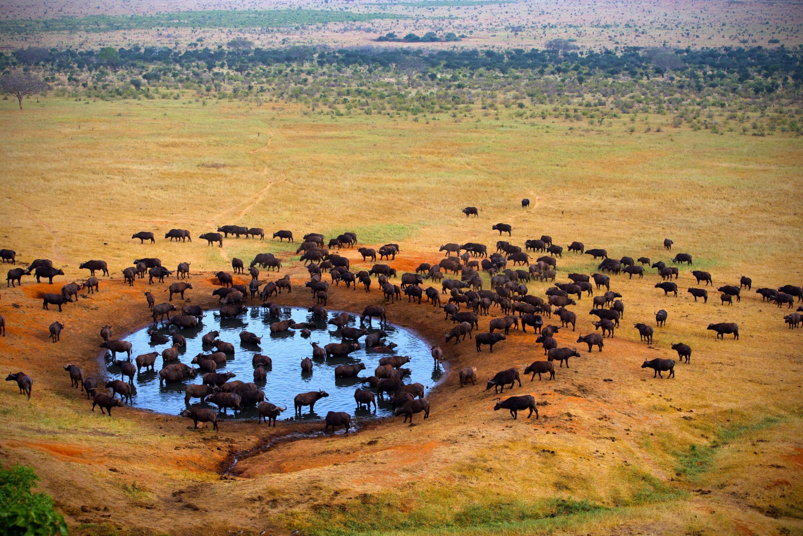 https://bubo.sk/uploads/galleries/16290/safari-pozname-najlepsie-safari-na-svete..jpg