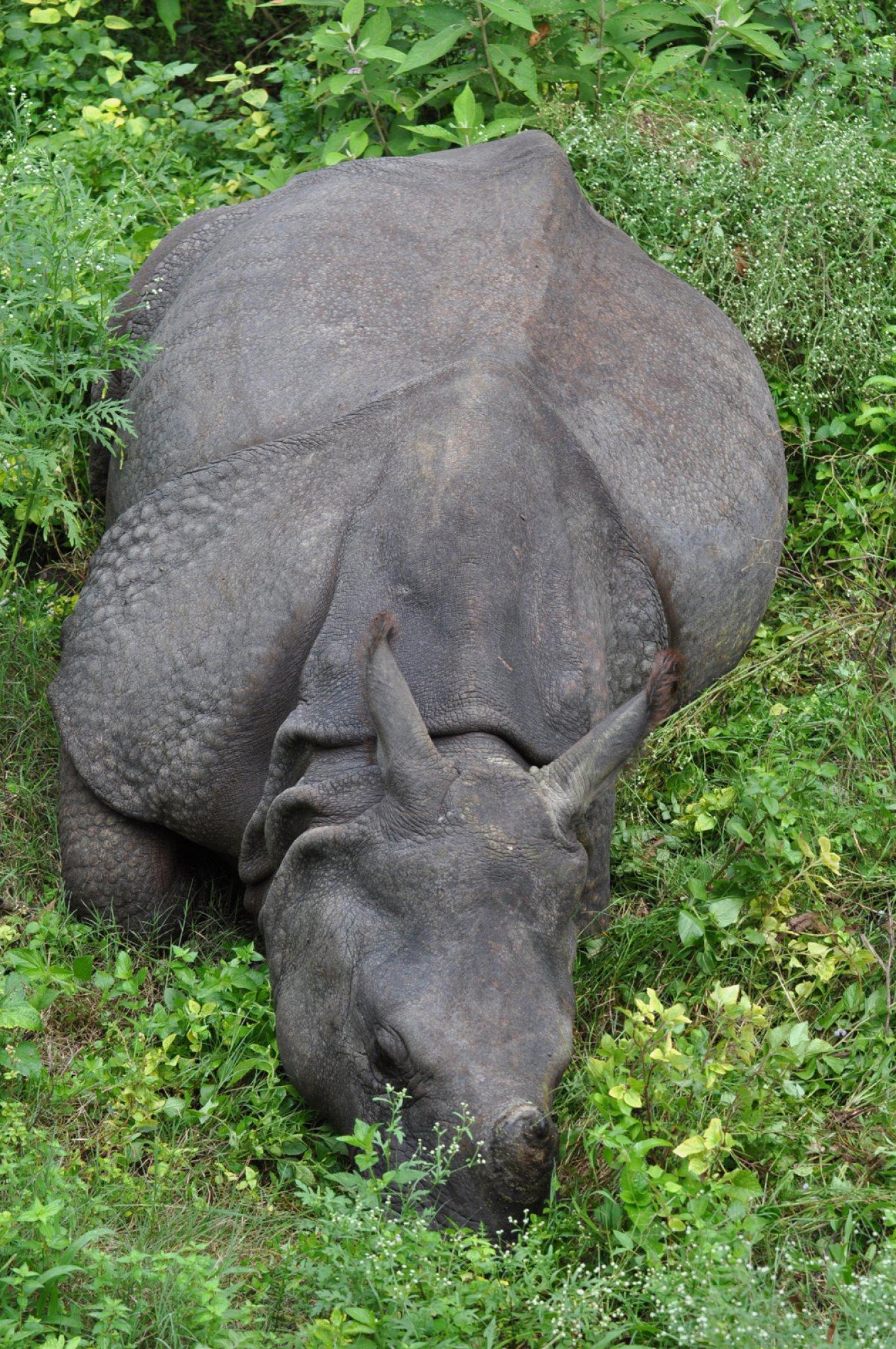 https://bubo.sk/uploads/galleries/16319/nepal-chitwan-miro-letasi-17-.jpg