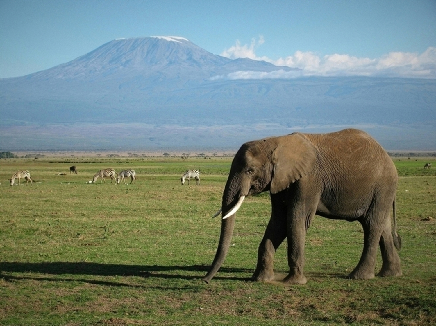 https://bubo.sk/uploads/galleries/16401/amboseli-img_2793.jpg
