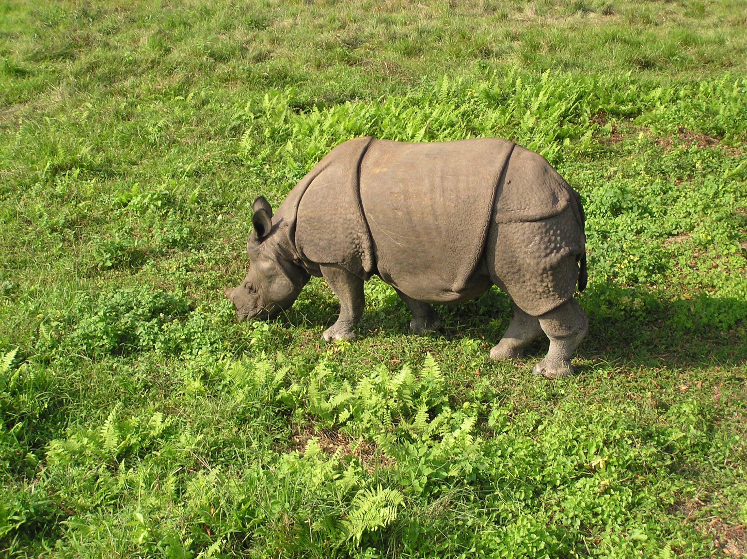 https://bubo.sk/uploads/galleries/3467/nepal-chitwan-063001-65-.jpg