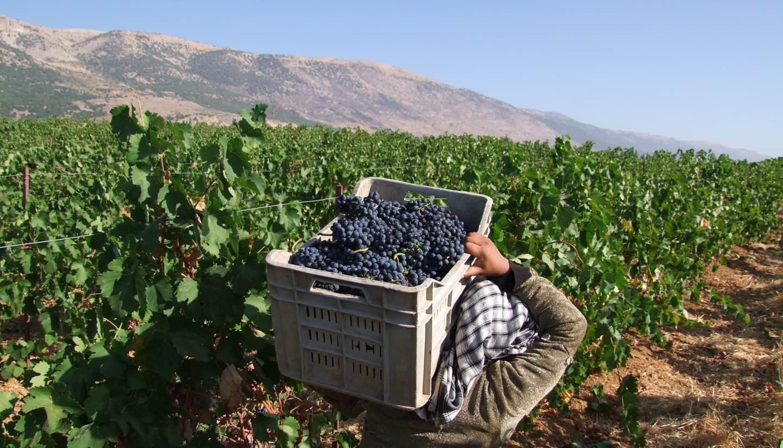 https://bubo.sk/uploads/galleries/4934/oth-middle-east-lebanon-kefraya-bedouins-1-hero-1440.jpg