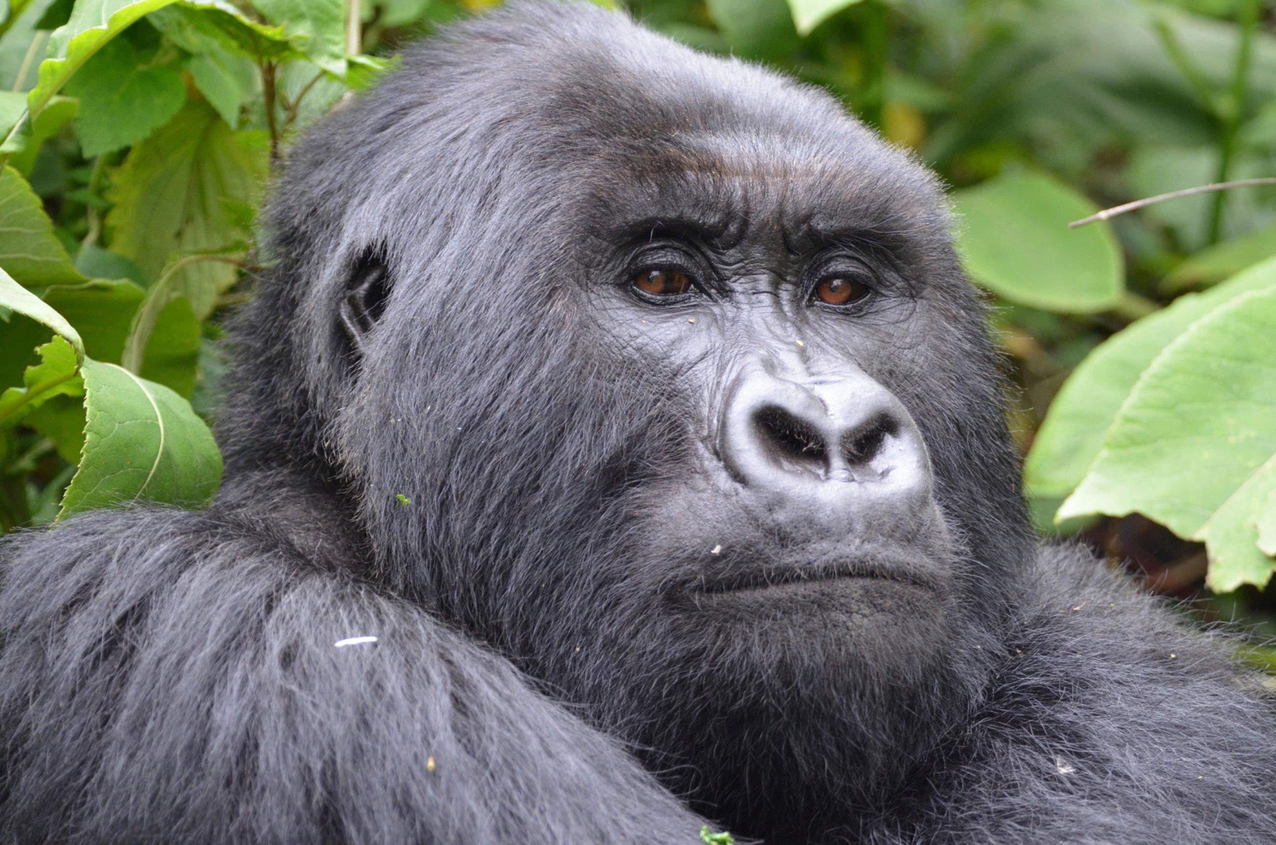 https://bubo.sk/uploads/galleries/4986/burundi-rwanda-uganda-kongo-martin-karnis-4032-2-.jpg