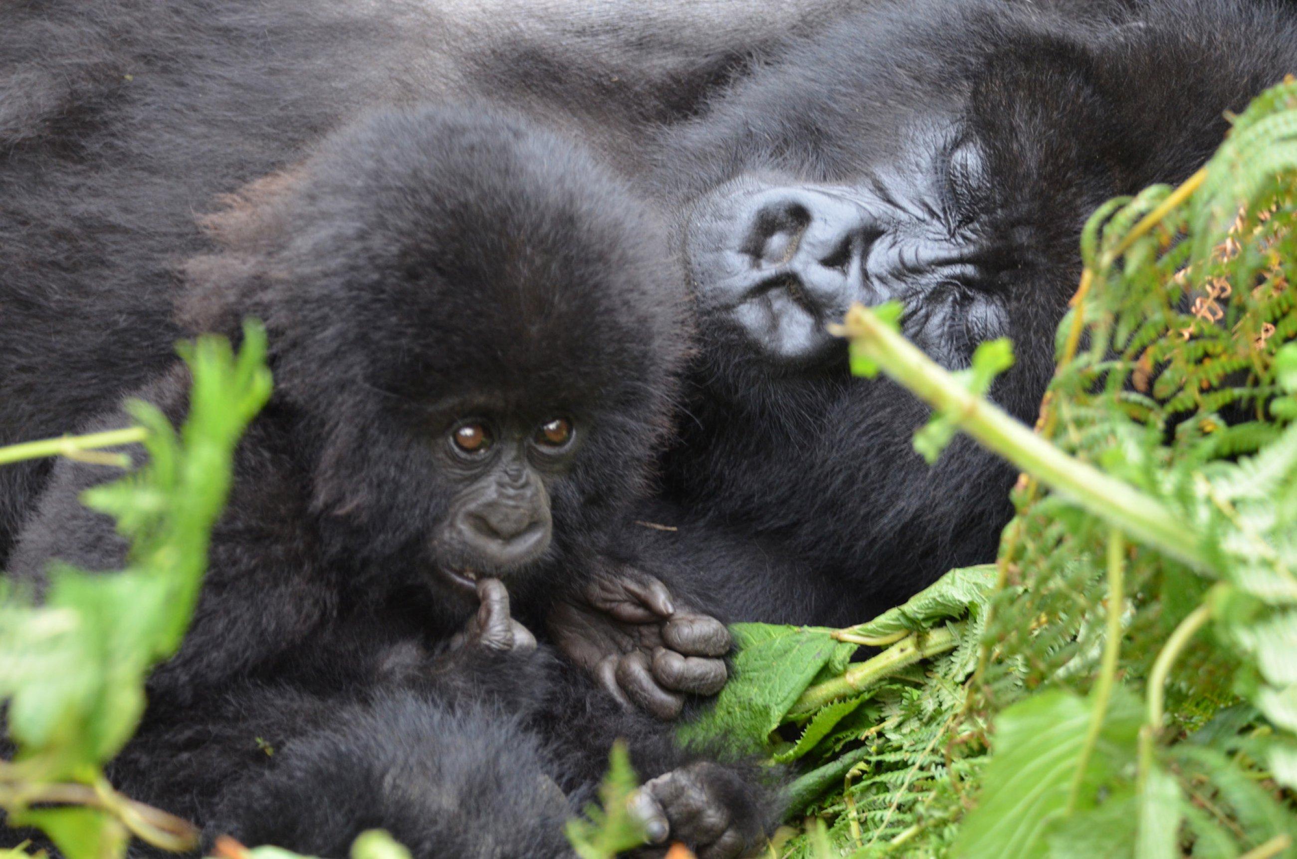 https://bubo.sk/uploads/galleries/4986/burundi-rwanda-uganda-kongo-martin-karnis-4032-3-.jpg