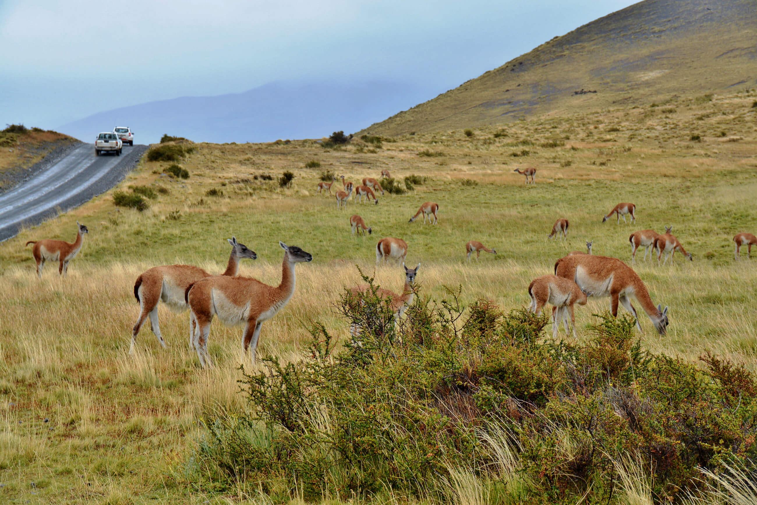 https://bubo.sk/uploads/galleries/5017/patagonia-chile-mirka-sulka-71-.jpg
