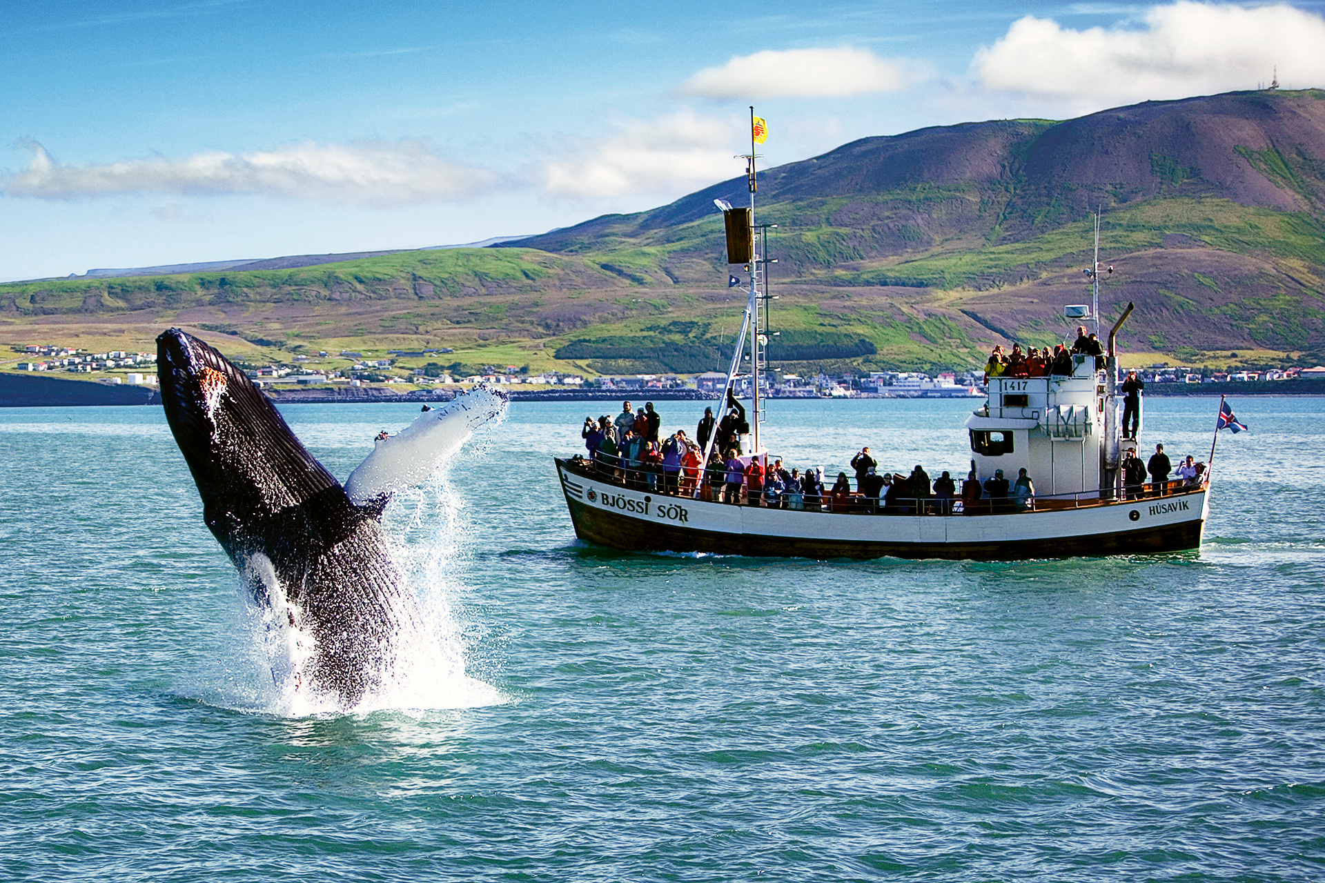 https://bubo.sk/uploads/galleries/5039/jumping-humpback-with-husavik-in-the-background.jpg