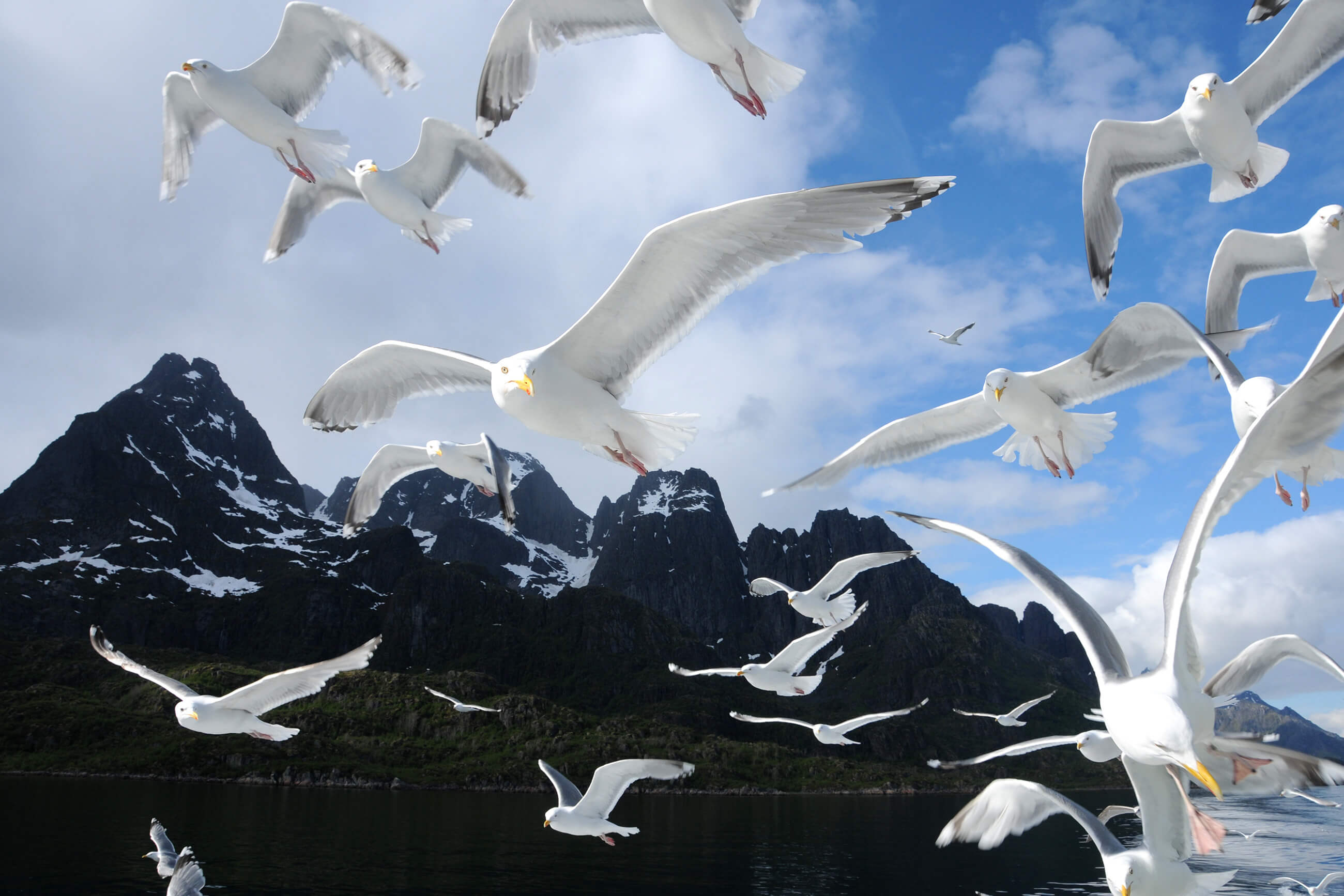 https://bubo.sk/uploads/galleries/5043/seagulls-trollfjorden-norway-hgr-109856--photo_photo_competition-1-.jpg