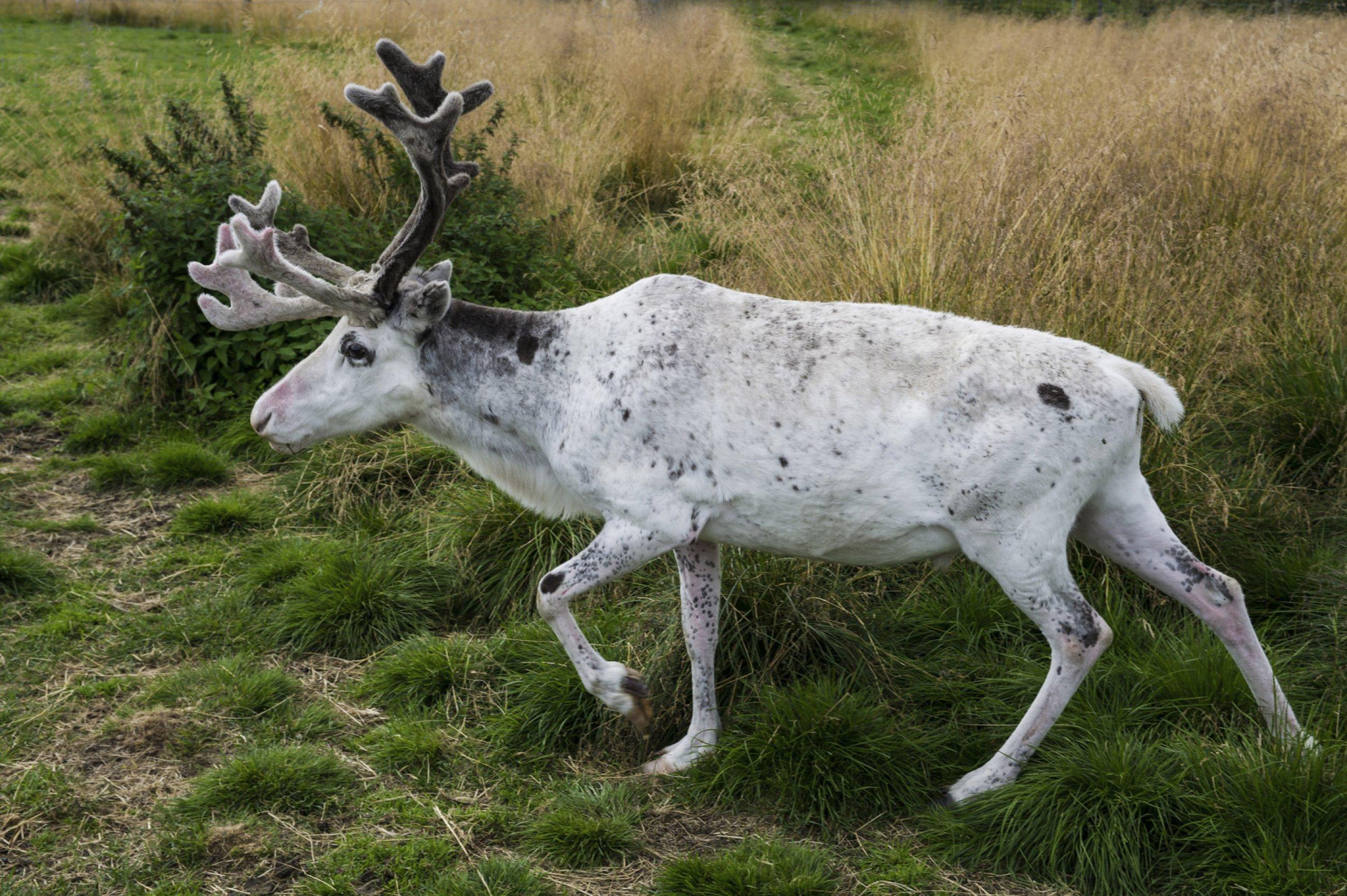 https://bubo.sk/uploads/galleries/5045/finsko-visiting-the-sami-reindeer-camp-visitnorway.com.jpg