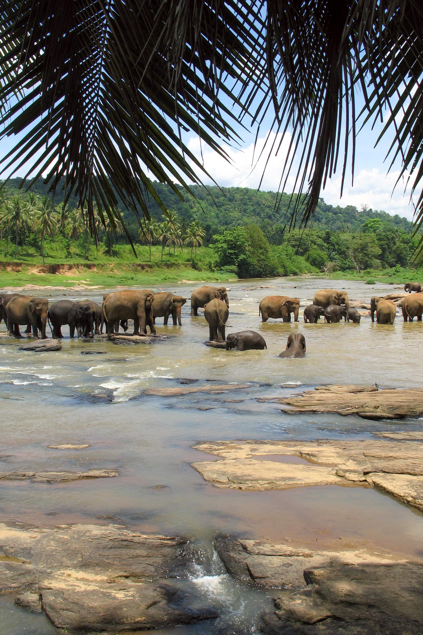 https://bubo.sk/uploads/galleries/5058/archiv_misogaj_srilanka_picture-049.jpg