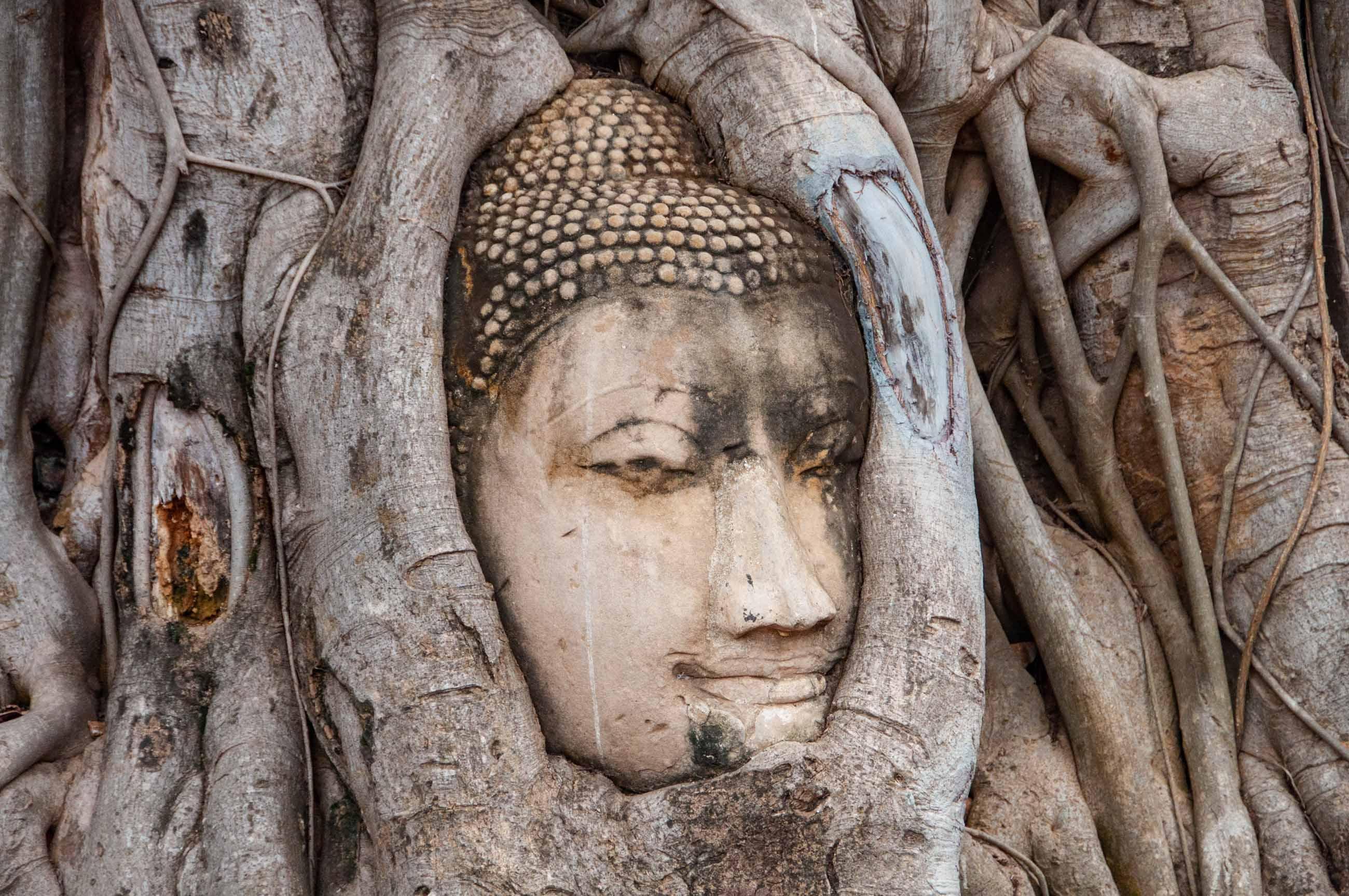 https://bubo.sk/uploads/galleries/5060/tomaskubus_thajsko_tms_budhova-hlava-ayutthaya.jpg