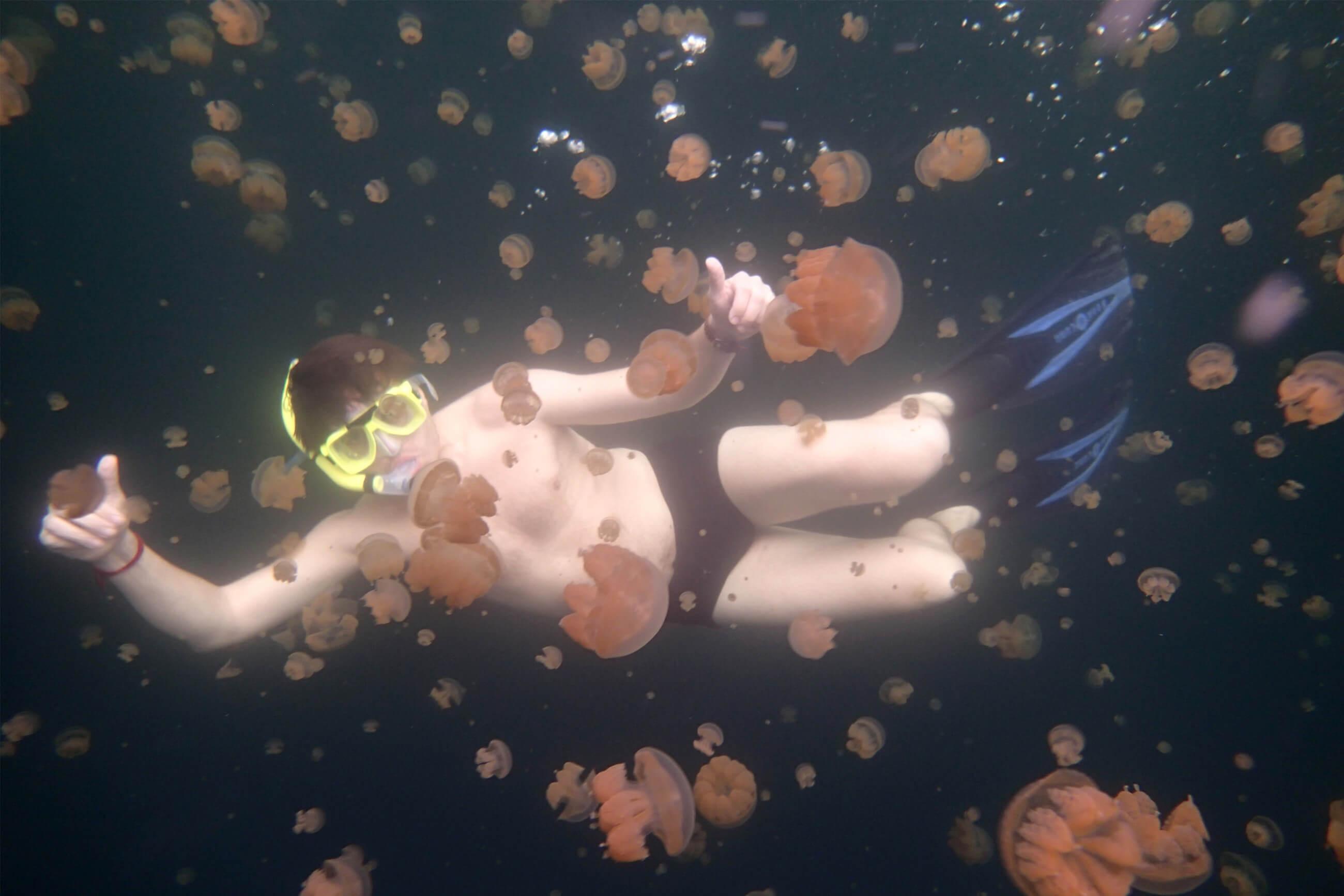 https://bubo.sk/uploads/galleries/7300/lubosfellner_palau_s-bubo-neriskujte-plavanie-s-meduzami-na-palau.jpg