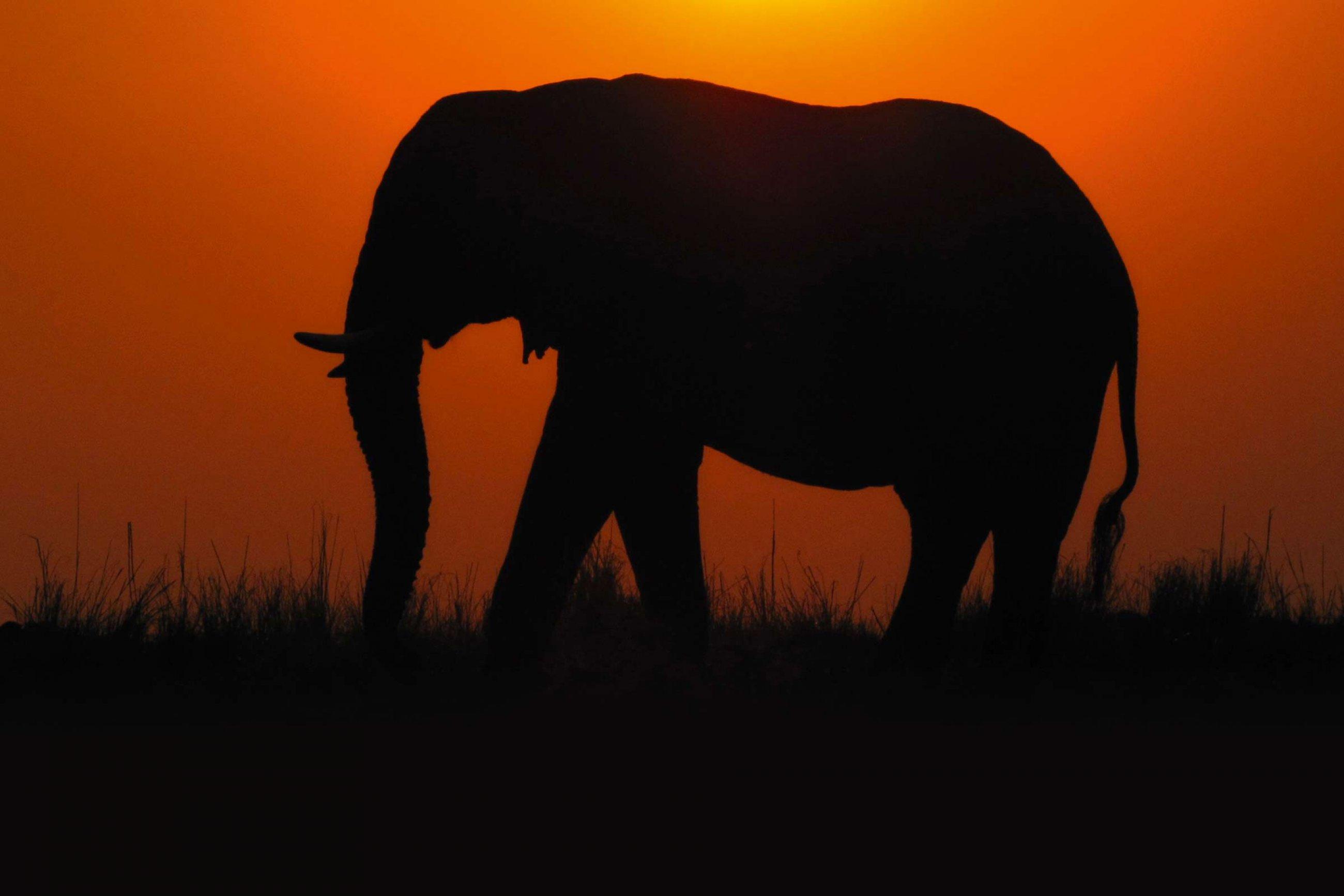 https://bubo.sk/uploads/galleries/7302/tri-krajiny-afriky-safari-a-plaz.jpg