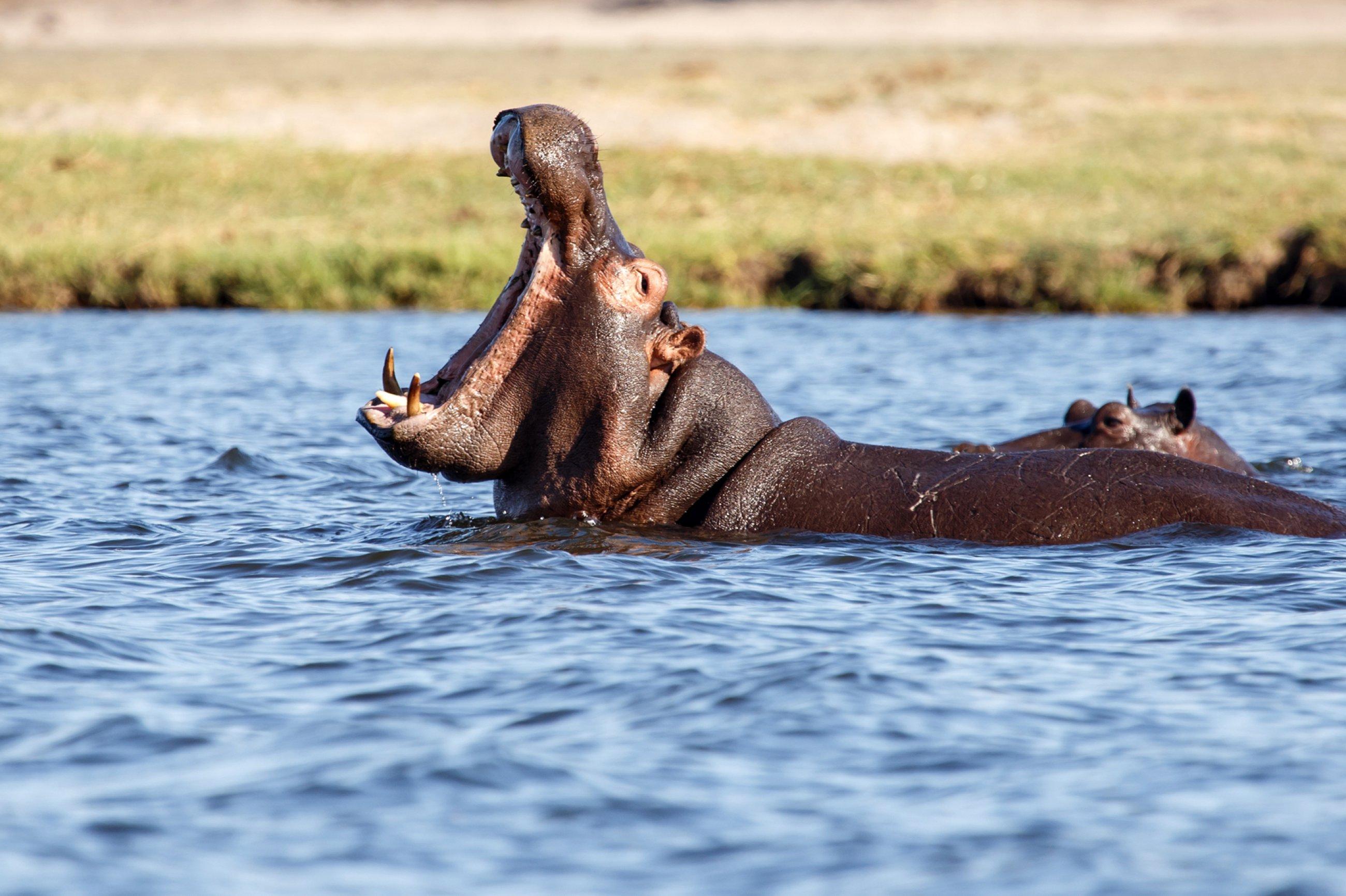 https://bubo.sk/uploads/galleries/7303/120-121-zoci-voci-najnebezpecnejsiemu-zvieratu-afriky..jpg