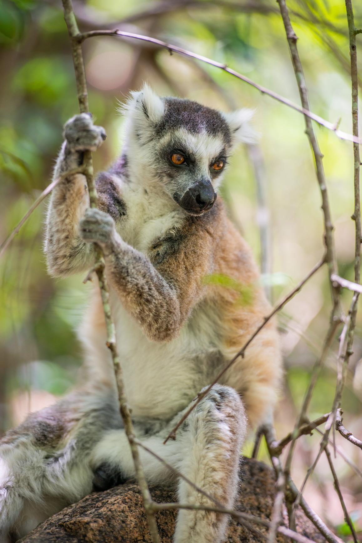 https://bubo.sk/uploads/galleries/7310/roberttaraba_madagaskar_lemur2-1.jpg