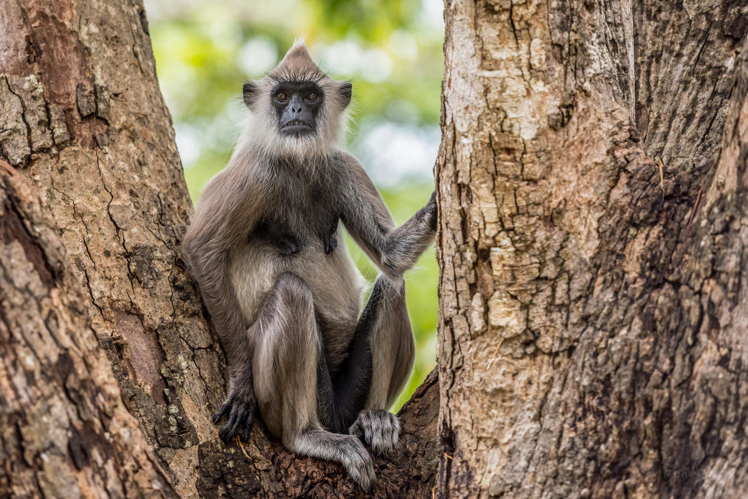 https://bubo.sk/uploads/galleries/7327/martinferencik_srilanka_dsc7606.jpg