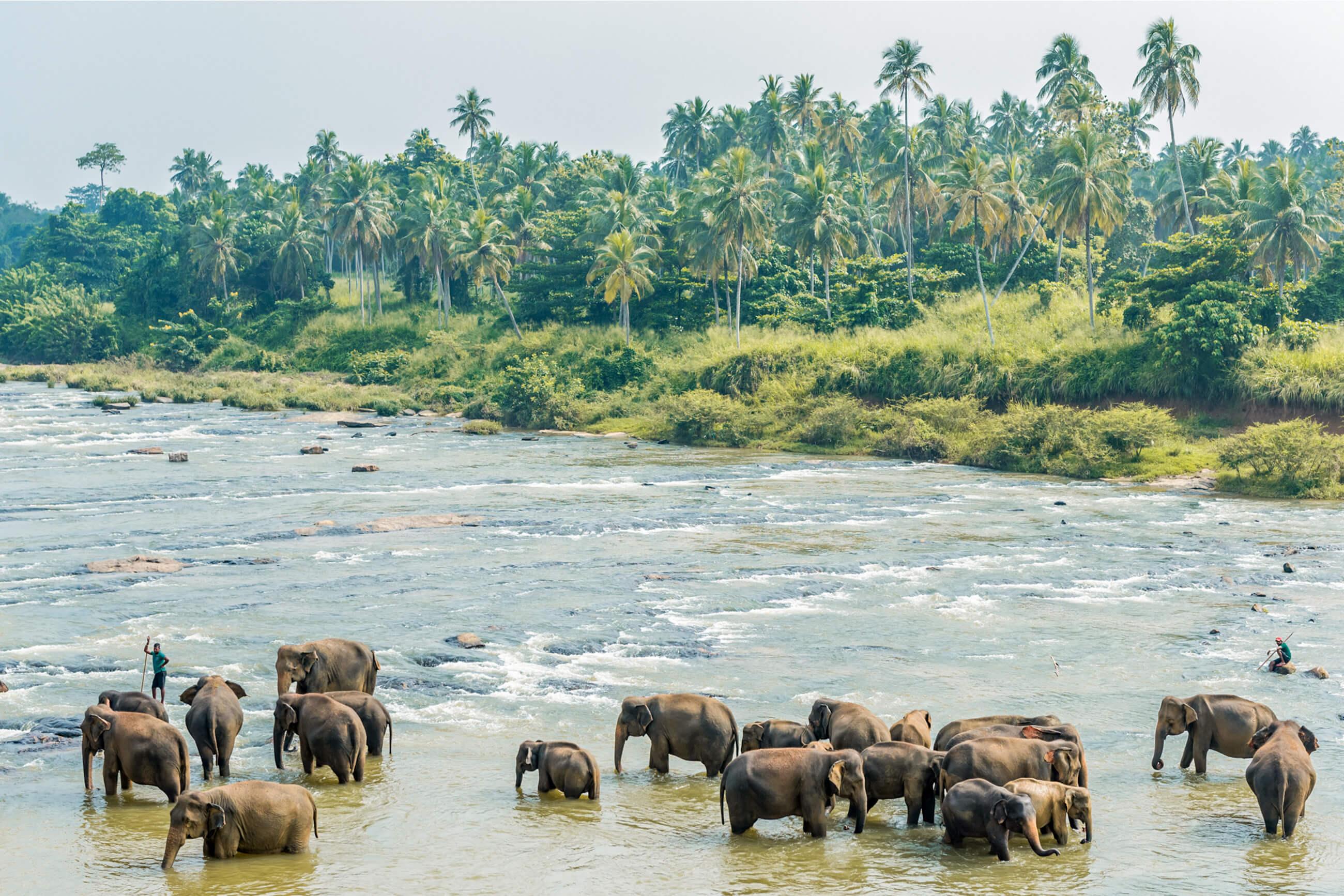 https://bubo.sk/uploads/galleries/7327/martinferencik_srilanka_dsc8951-1-.jpg