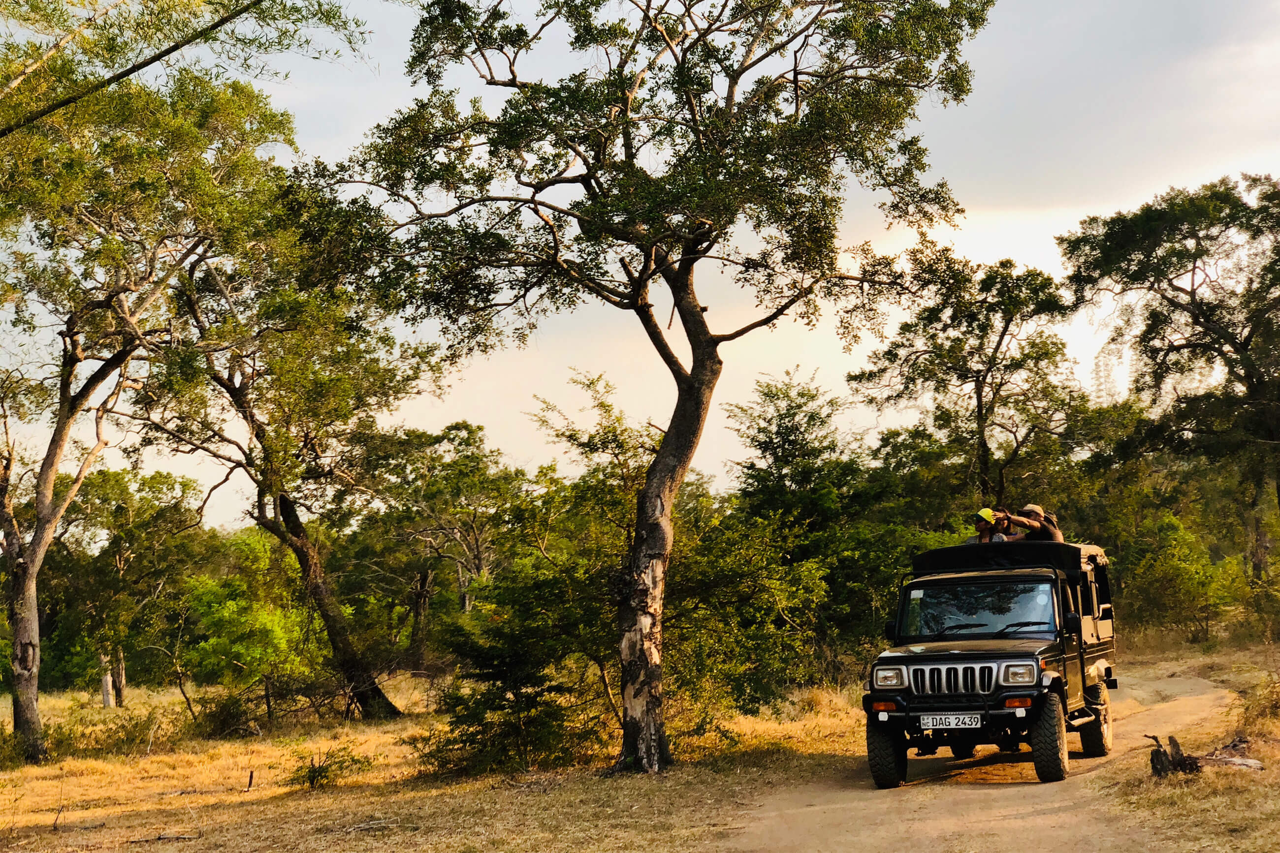 https://bubo.sk/uploads/galleries/7327/robert_taraba_srilanka_safari2.jpg