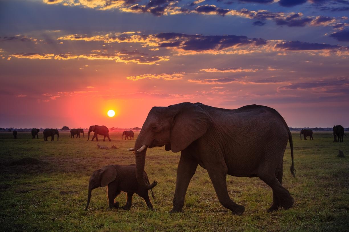 https://bubo.sk/uploads/galleries/7335/shutterstock_botswana_chobe_slony_safari_554674285.jpg