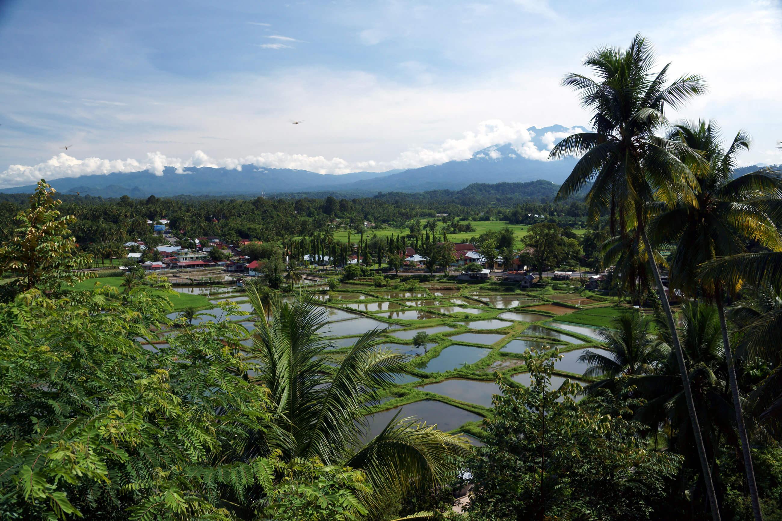 https://bubo.sk/uploads/galleries/7396/archiv_jozefzeliznakst_indonezia_sumatra_05-2014-222-.jpg