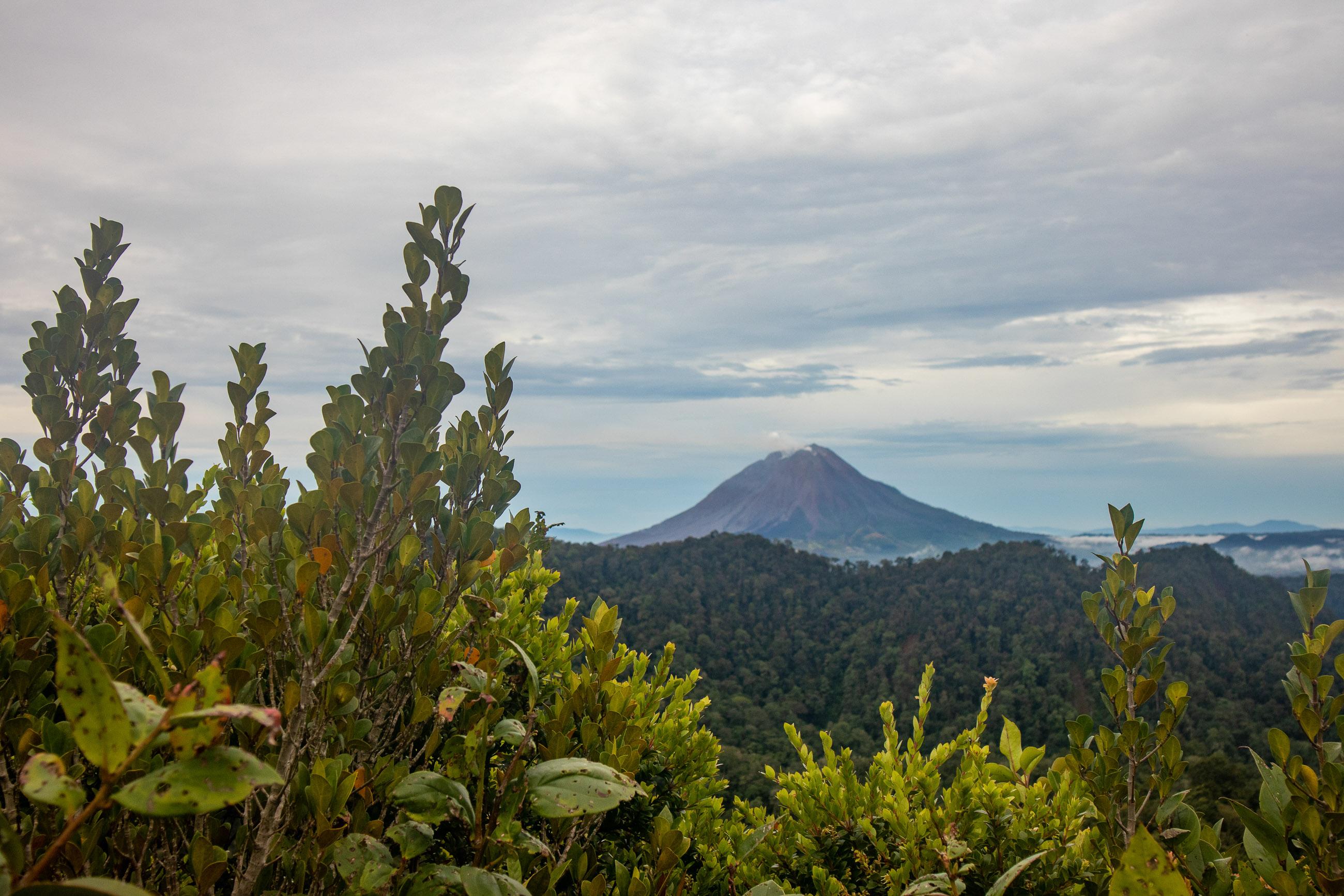 https://bubo.sk/uploads/galleries/7396/tomashornak_indonezia_sumatra_img_0149-1-28.jpg