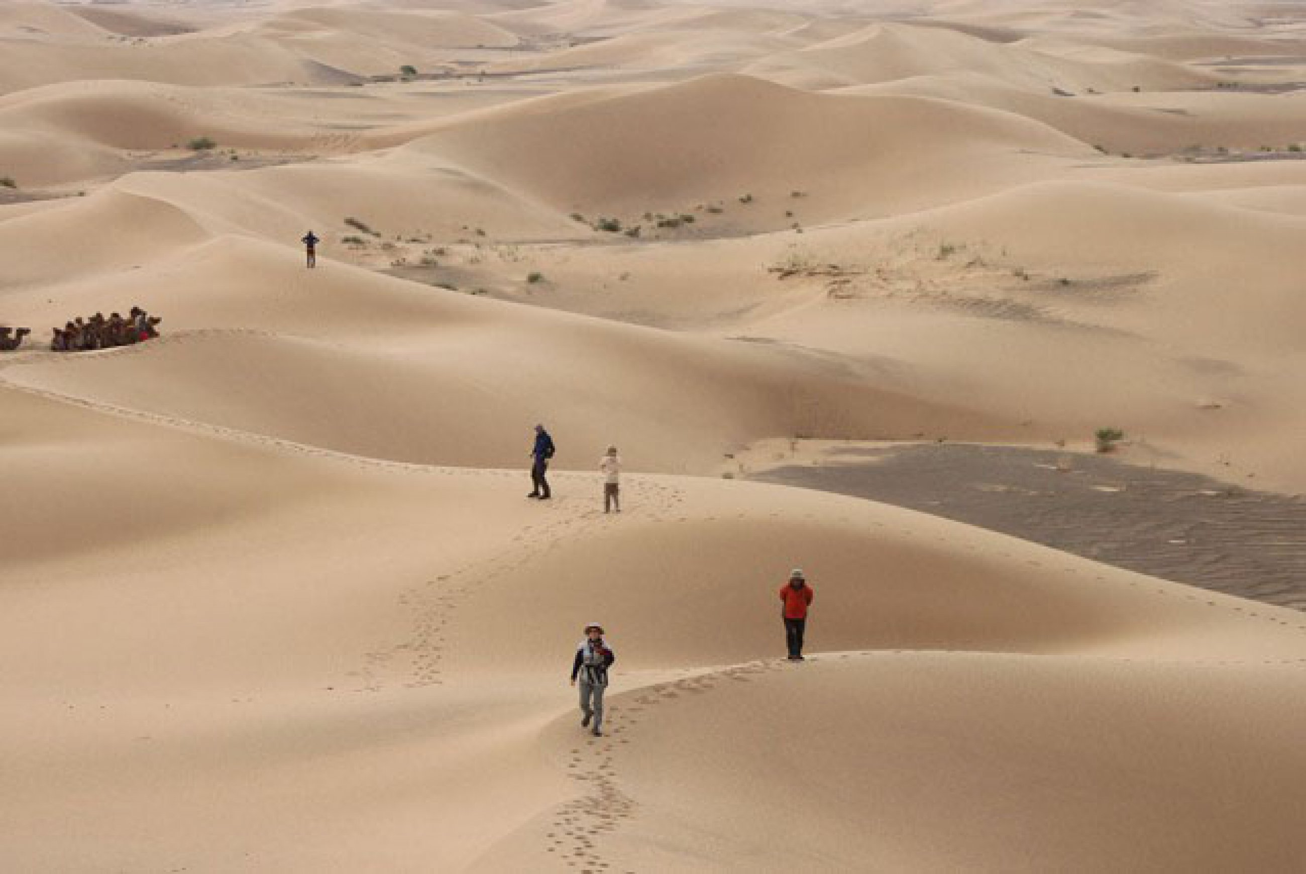 https://bubo.sk/uploads/galleries/7450/sand-dunes-hongoryn-els.jpg