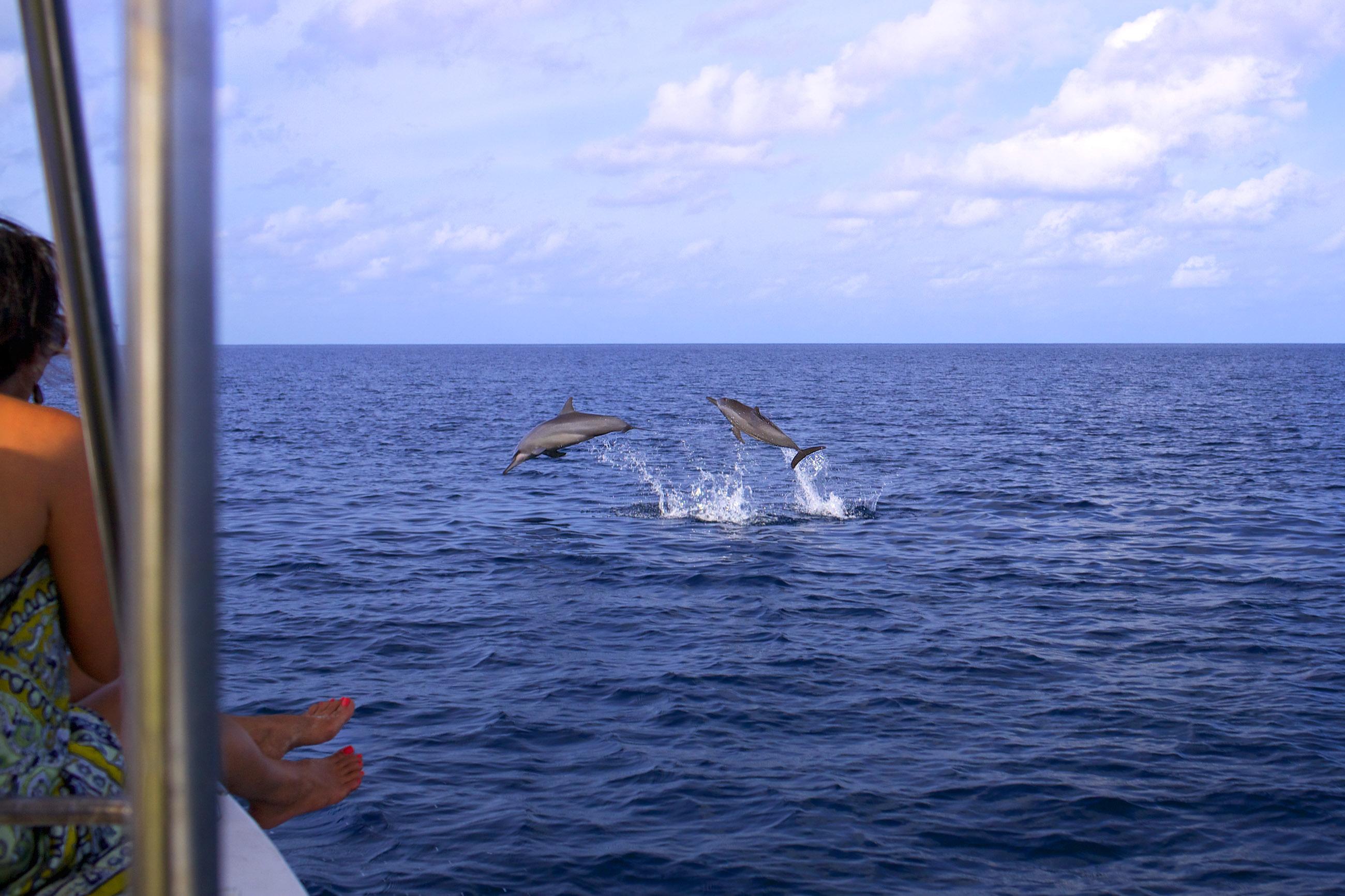 https://bubo.sk/uploads/galleries/7467/dolphin_cruise_2.jpg