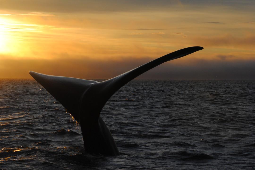 https://bubo.sk/uploads/galleries/7521/peninsula-valdes---sunset-whale-watching.jpg