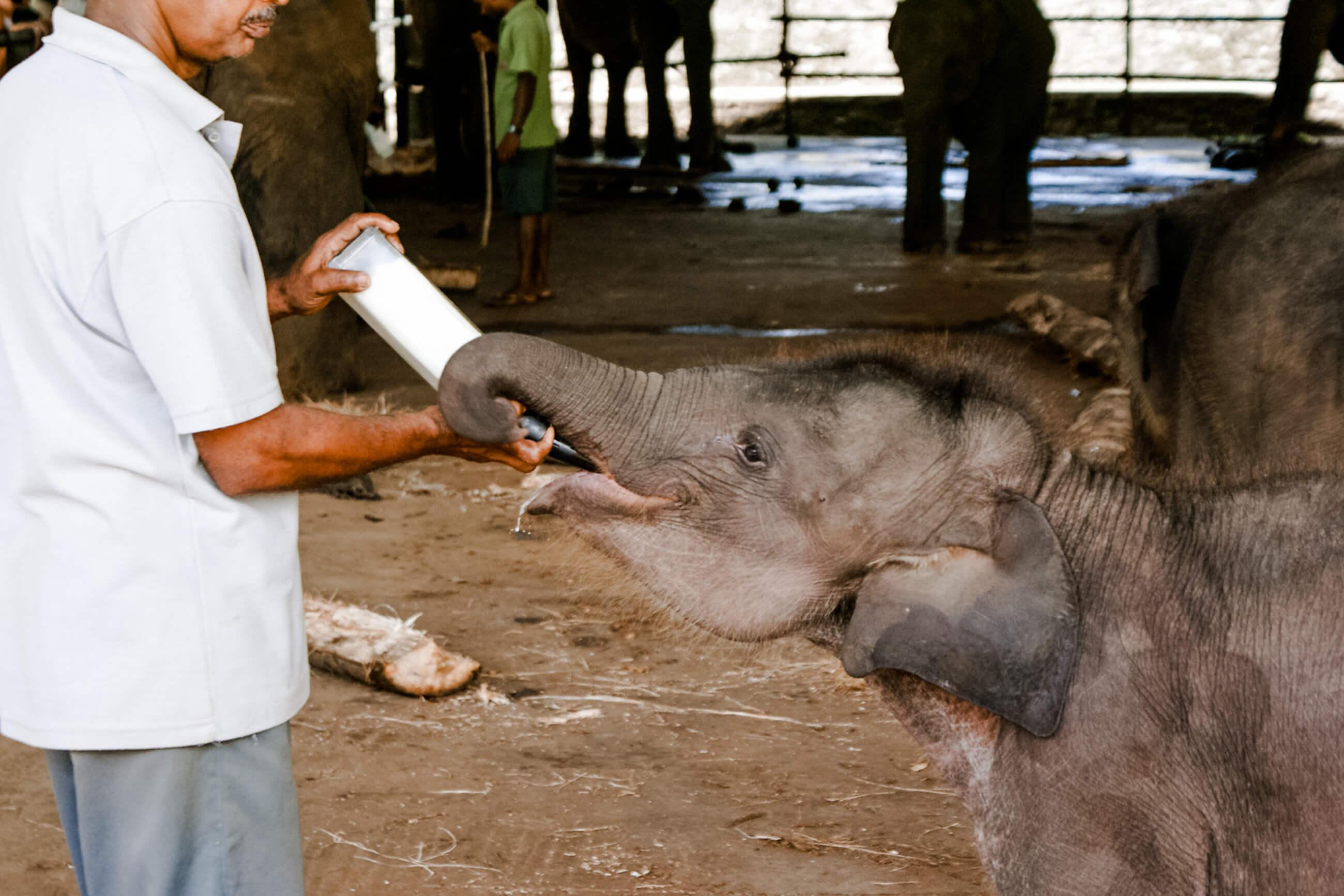 https://bubo.sk/uploads/galleries/7521/srilanka_family_7117_sri-lanka-fam-marec-2009-693.jpg