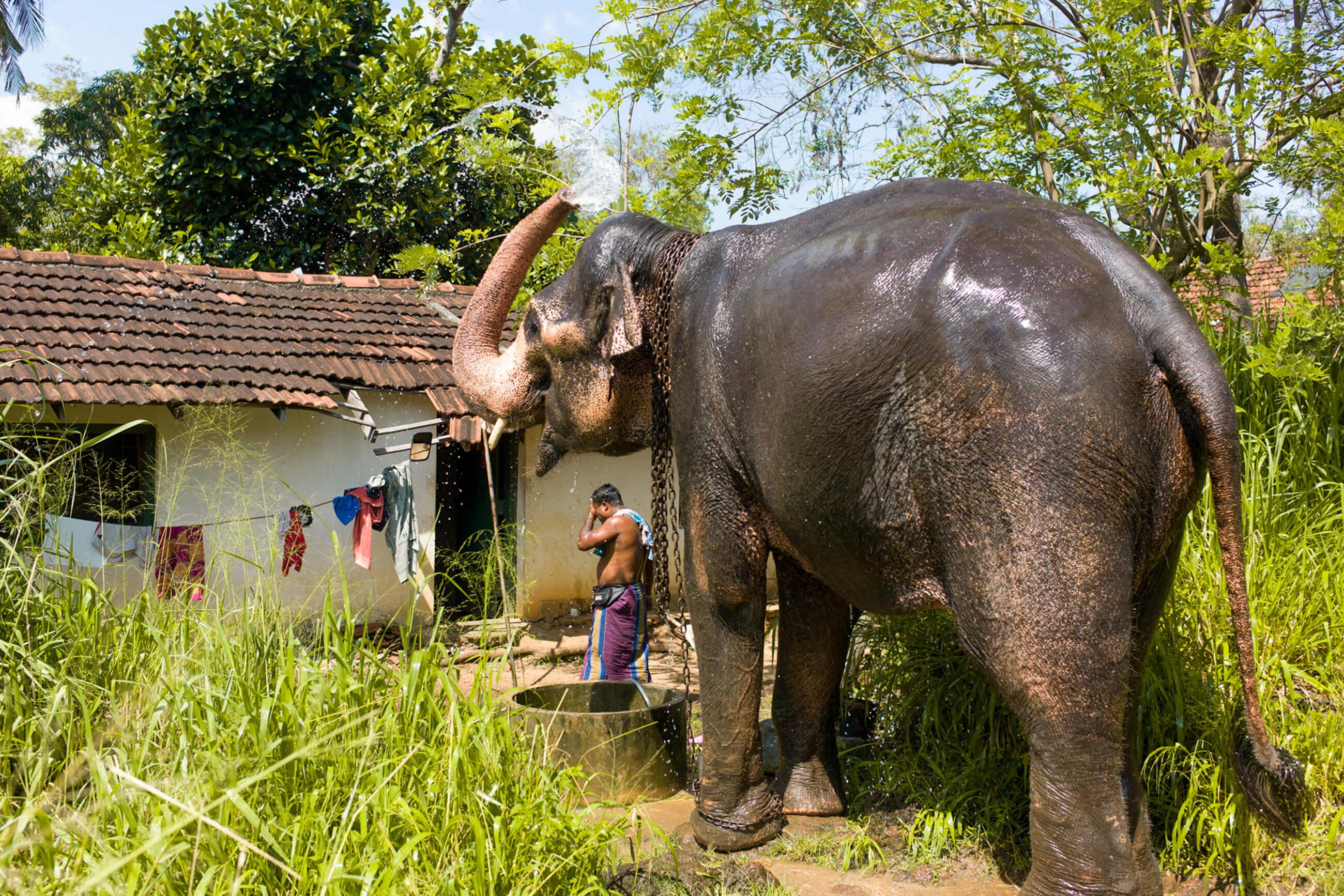 https://bubo.sk/uploads/galleries/7521/srilanka_family_nas-slonik-sa-predtym-ako-na-neho-vysadneme-sprchuje.jpg