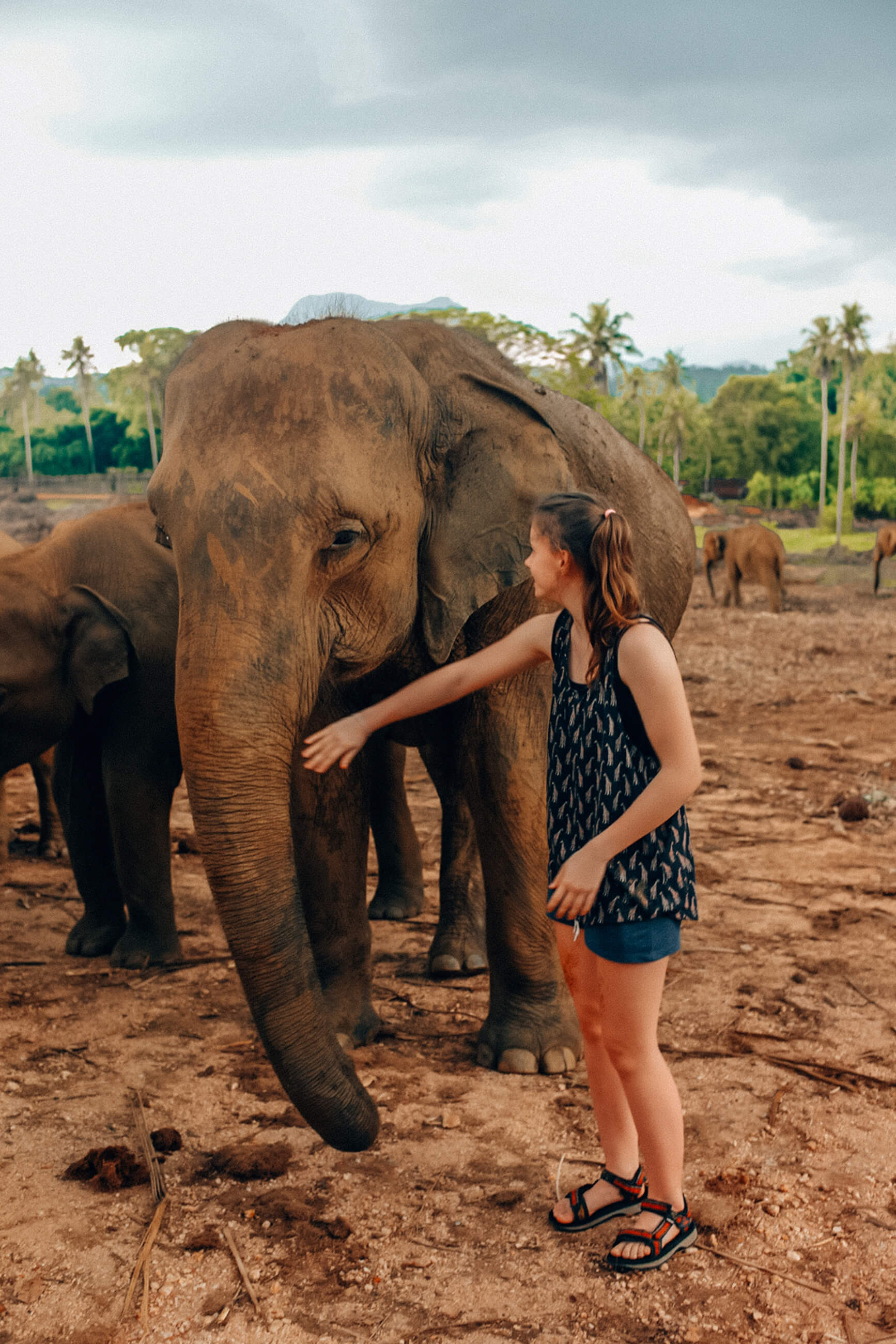 https://bubo.sk/uploads/galleries/7521/srilanka_family_slony-nazivo-su-ovela-uzasnejsie-nez-predpokladate.jpg