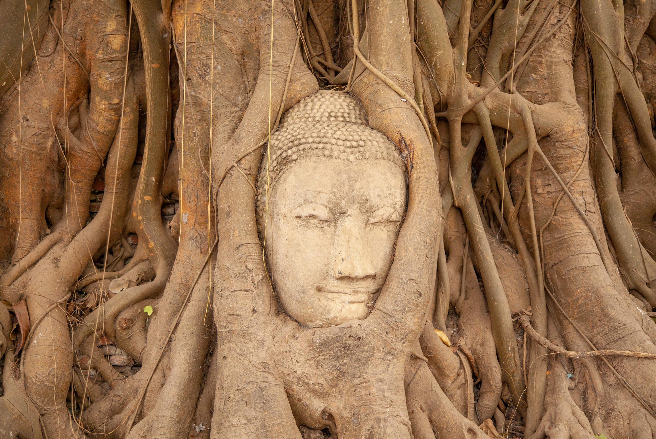 https://bubo.sk/uploads/galleries/7534/katkaliskovast_thajsko_watmahathat_ayutthaya_img_0905.jpg