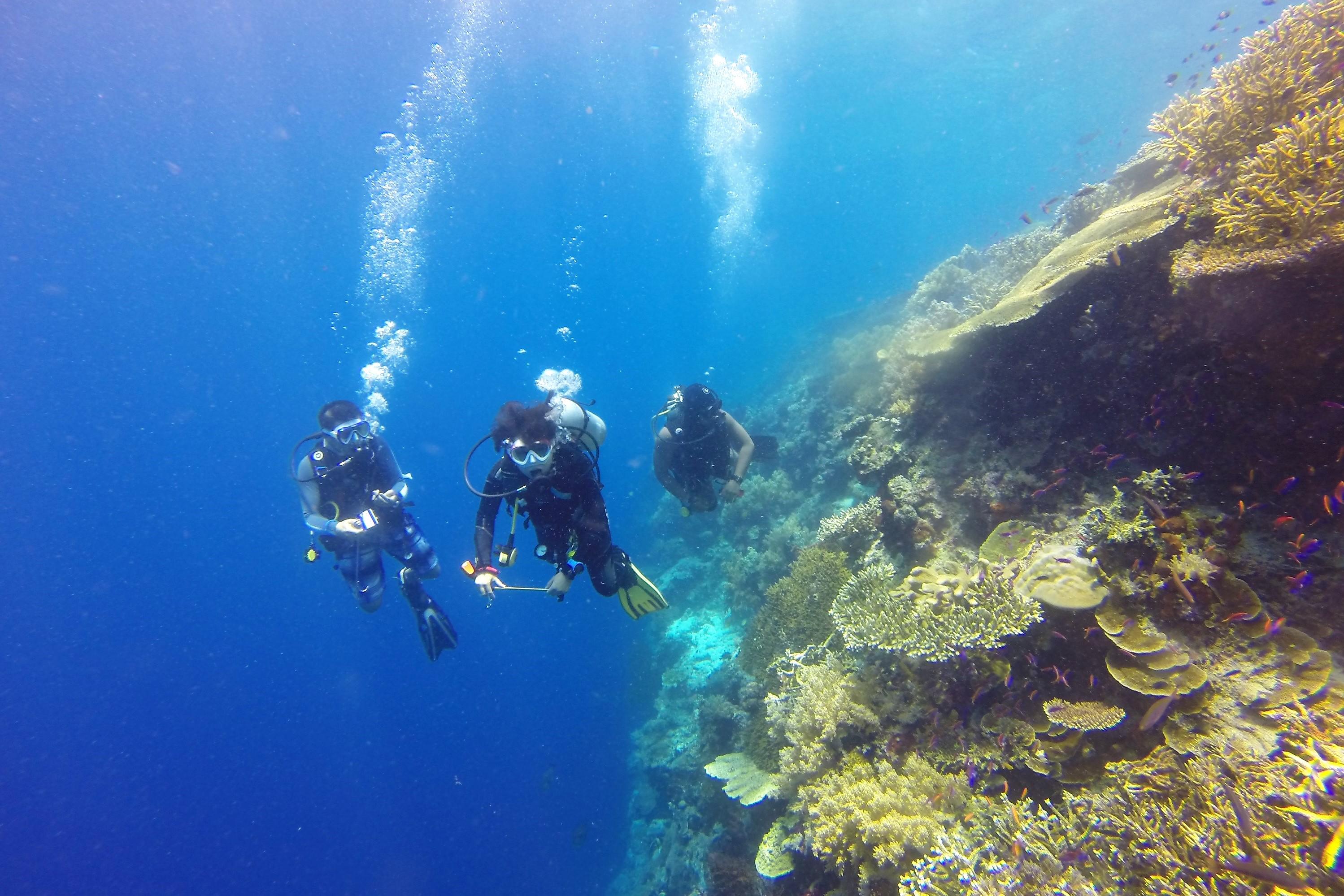 https://bubo.sk/uploads/galleries/8377/atauro-diving.jpg